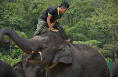 Controlling Your Elephant